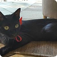 Adopt A Pet :: Lacey - Monroe, NC
