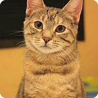 Adopt A Pet :: Cressida - Carlisle, PA