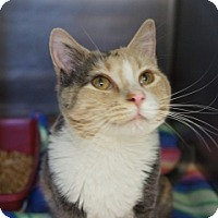 Adopt A Pet :: Squirt - Libby, MT