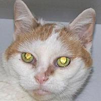 Adopt A Pet :: Paris - Kalamazoo, MI