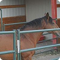 Adopt A Pet :: Sadie - Larskpur, CO