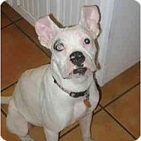 Adopt A Pet :: Opal - Thomasville, GA