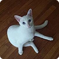 Adopt A Pet :: Will (Shooting Survivor!) - Arlington, VA