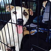 Adopt A Pet :: Tasha and pup Tilly - Sacramento, CA