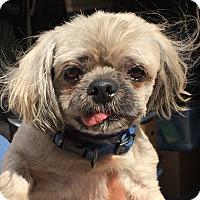 Adopt A Pet :: Fortune - Orlando, FL