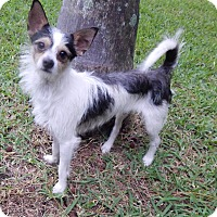 Adopt A Pet :: Cooper - Miami, FL