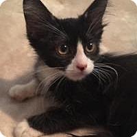 Adopt A Pet :: Reno - Kingwood, TX
