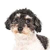 Adopt A Pet :: Katie - St. Louis Park, MN
