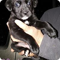 Adopt A Pet :: Mavis - Sussex, NJ