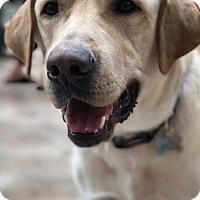 Adopt A Pet :: Hoop - Denton, TX