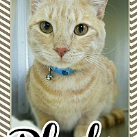 Adopt A Pet :: Pluto - Edwards AFB, CA