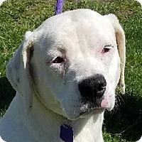 Adopt A Pet :: Marlee - Lexington, KY