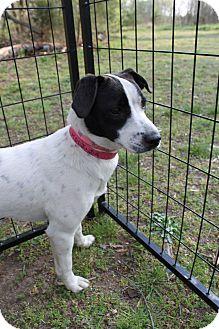 Hound (Unknown Type) Mix Dog for adoption in Waldorf, Maryland - Melinda #390