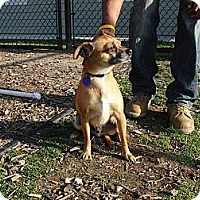 Adopt A Pet :: Peter - West Los Angeles, CA