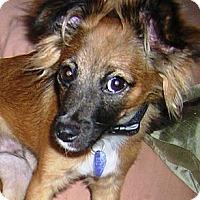 Adopt A Pet :: TIGGER - Hollywood, FL