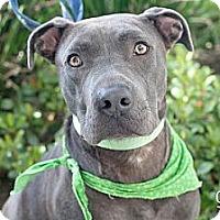 Adopt A Pet :: Bruno - Mission Viejo, CA