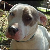 Adopt A Pet :: Jasmin - Plainfield, CT