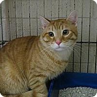 Adopt A Pet :: Milo & Rudy - Chesapeake, VA