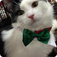 Adopt A Pet :: Beauregard - Harrisburg, NC