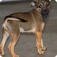 Adopt A Pet :: Penelope - La Habra Heights, CA