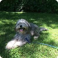 Adopt A Pet :: Frankie - bridgeport, CT