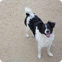 Adopt A Pet :: Pepper - Nuevo, CA