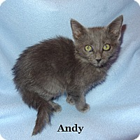 Adopt A Pet :: Andy - Bentonville, AR