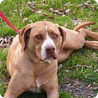 Adopt A Pet :: Bonnie - Rigaud, QC