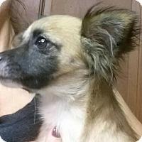 Adopt A Pet :: Audrey - Sugar Land, TX