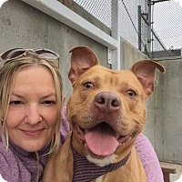 Adopt A Pet :: THRILLER - Kimberton, PA