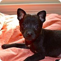 Adopt A Pet :: Velma - Homewood, AL