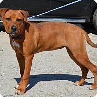 Adopt A Pet :: Scarlett - Jackson, GA
