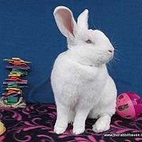 Adopt A Pet :: Rigel - Scotts Valley, CA