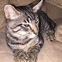 Adopt A Pet :: Taylor - Vacaville, CA