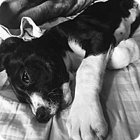 Adopt A Pet :: Winnie - Aurora, CO
