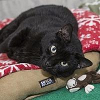 Adopt A Pet :: Felicia - Columbus, OH