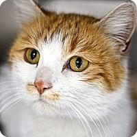 Adopt A Pet :: Juliette - Pittstown, NJ