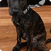 Adopt A Pet :: Ava - Orlando, FL