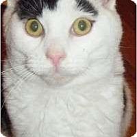 Adopt A Pet :: Kenny - Kensington, MD