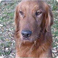 Adopt A Pet :: georgee - Mission Hills, CA