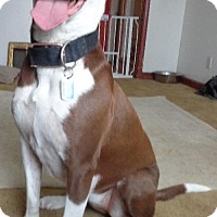 Adopt A Pet :: Lucky - Lakeville, MN