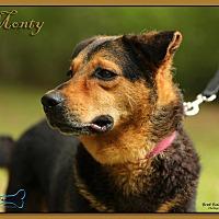 Adopt A Pet :: Monte - Sarasota, FL