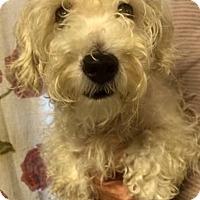 Adopt A Pet :: Rosie - Kansas city, MO