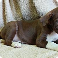 Adopt A Pet :: Darwin - Salem, NH