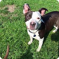 Adopt A Pet :: Baxter - Troy, MI