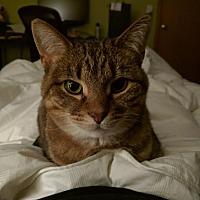 Adopt A Pet :: Nala - Huntley, IL