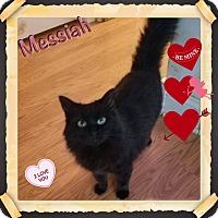 Adopt A Pet :: Messiah - Harrisburg, NC
