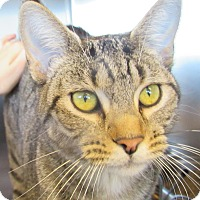 Adopt A Pet :: Sheila - Sierra Vista, AZ