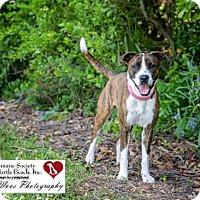 Adopt A Pet :: Remy - North Myrtle Beach, SC