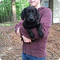 Adopt A Pet :: BM3 - Hanover, PA